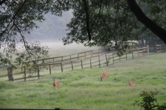 Deer in morning fog